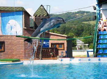 Увлекательное шоу в дельфинарии