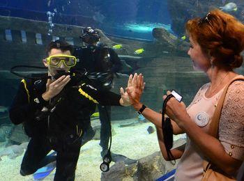 Шоу - программы в океанариуме