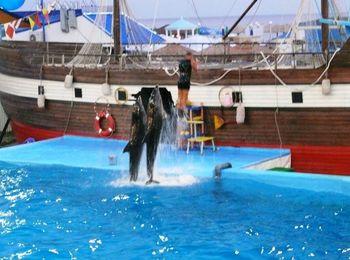 Отличное время перепровождения в Дельфинарии
