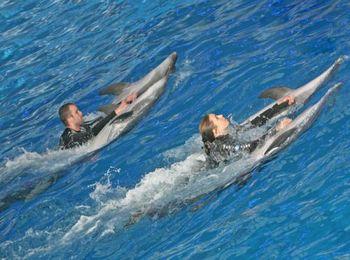 Немногие дельфинарии мира практикуют купание зрителей с дельфинами