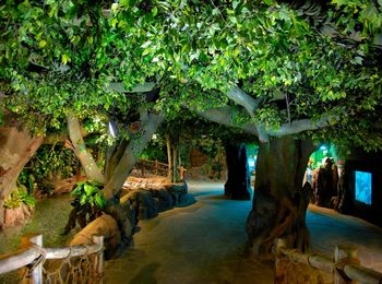 Сказочное путешествие в тропический лес