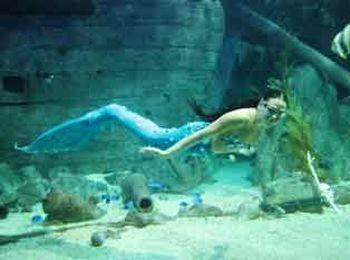 Зрелищное шоу под водой