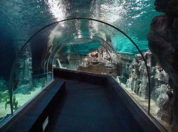 Экспозиции древнего моря