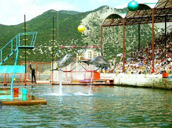Великолепные представления в Утришском дельфинарии