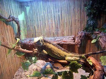В террариумах представлены сорок видов рептилий и пресмыкающихся