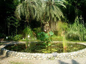 Красивейшее место живой растительной природы