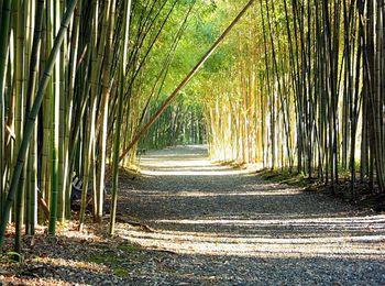 В Ботаническом саду многообразие живых растений, в том числе и высочайший бамбук