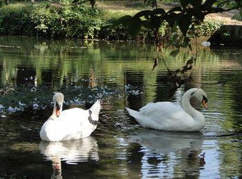 Удивительно красивое место отдыха Приморский парк