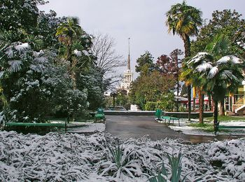 Сухая неморозная зима на Черноморском курорте