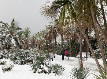 Прогулки по заснеженному парку в Сочи