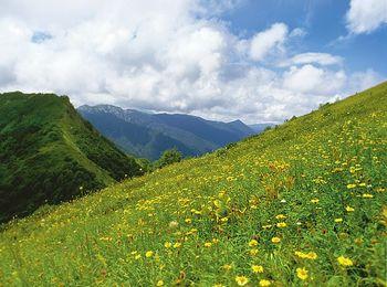 Красивейшая природа на фоне гор