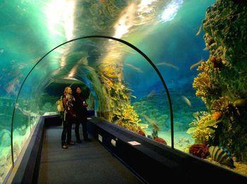 Знаменитый океанариум Sochi Discovery World в Адлере