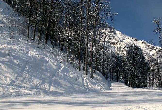 Снежное подножие горы и множество голых деревьев