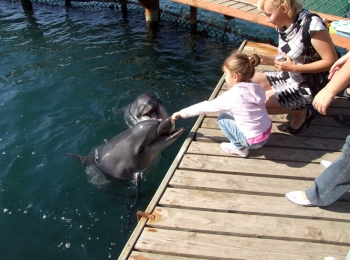 Мама с дочерью у кромки воды рядом с забавным дельфином