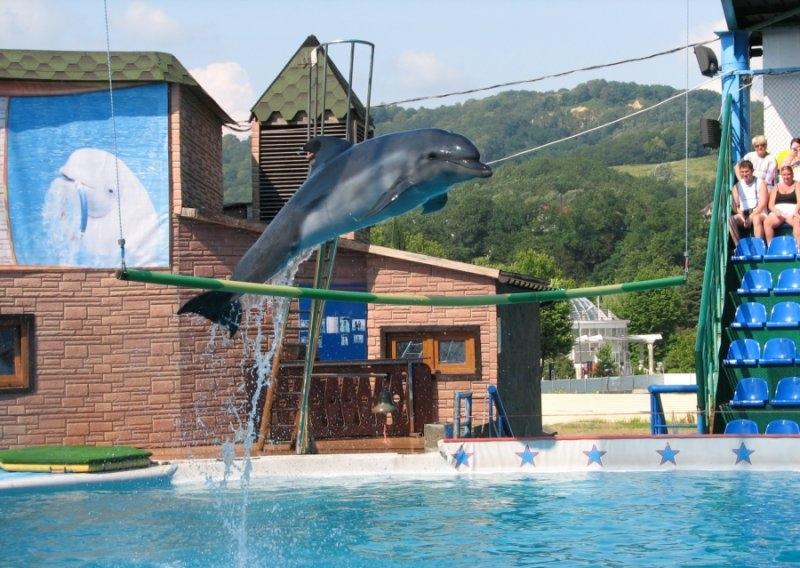Дрессированный дельфин взлетевший над поверхностью голубого бассейна