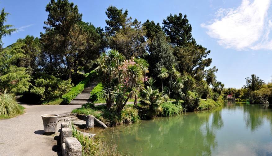 Пышная южная растительность у кромки зеленоватой воды