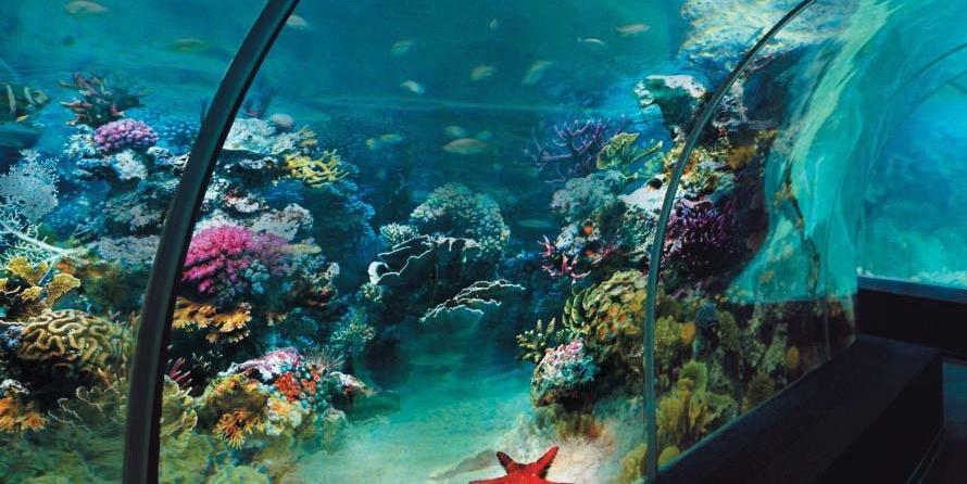 Яркая подводная живность и разноцветные кораллы за стеклом океанариума