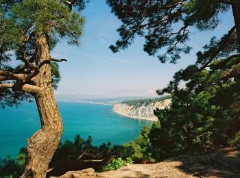 Высокие деревья на зеленом берегу с Черным морем вдали