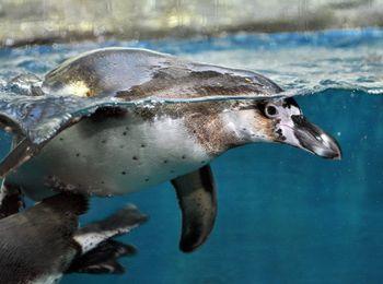 Пингвинарий на Пионерском проспектеросп