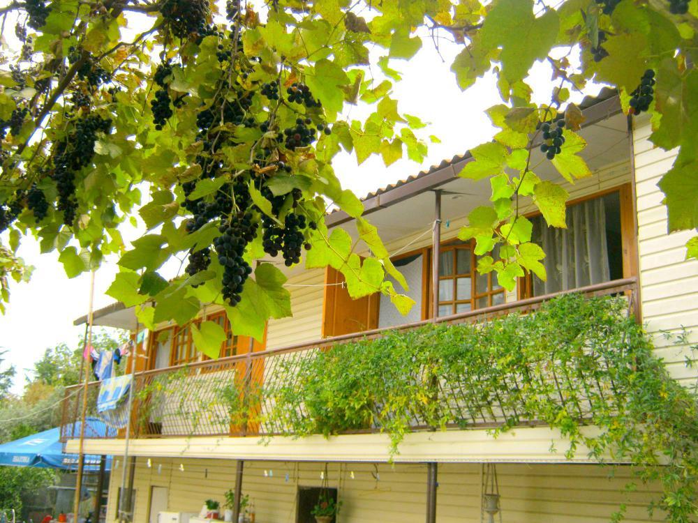 Дом с галереей и растущим во дворе вииноградником