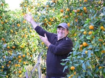 В конце лета - начале осени созревают вкуснейшие южные фрукты