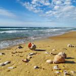 Песчаный пляж красивыми ракушками под синим небом
