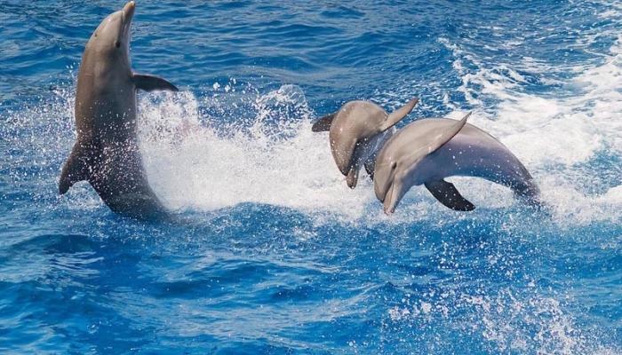 Во время отдыха можно съездить на экскурсию в дельфинарий ОПО