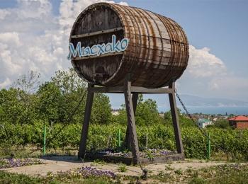 Экскурсия на винный завод Мысхако подарит массу новых впечатлений