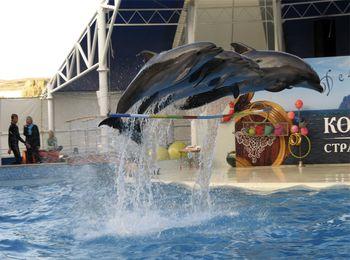Зрелищные представления в дельфинарии