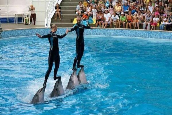 Яркие представления в дельфинарии