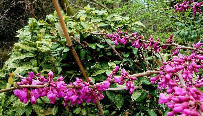 Различные цветы удивительной красоты