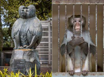Меры предосторожности при общении с животными