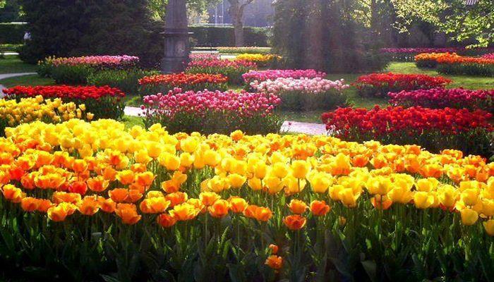 Традиционный парад тюльпанов