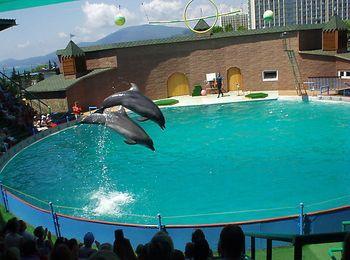 Знаменитый Утришский дельфинарий