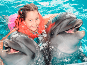 Стоимость услуг дельфинария