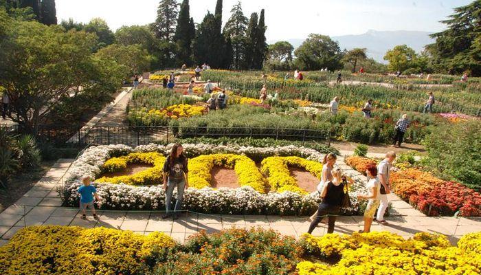 Цветущие хризантемы