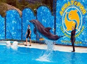 Кабардинка дельфинарий график работы