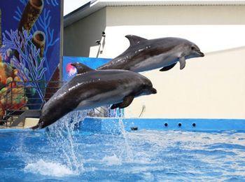Веселое представление в дельфинарии